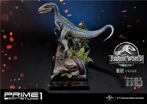 Prime 1 Studio 新品:1/6 《侏罗纪世界2》Blue布鲁来袭! 模玩 第2张