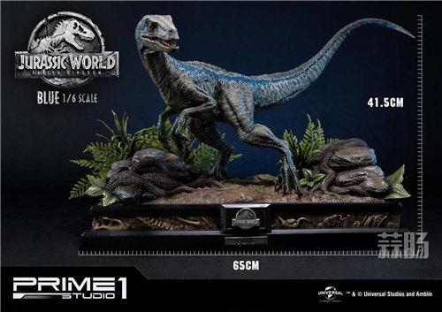 Prime 1 Studio 新品:1/6 《侏罗纪世界2》Blue布鲁来袭! 模玩 第5张