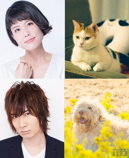 泽城美雪、前野智昭将为电影《旅猫日记》的猫与狗配音! 二次元 第2张