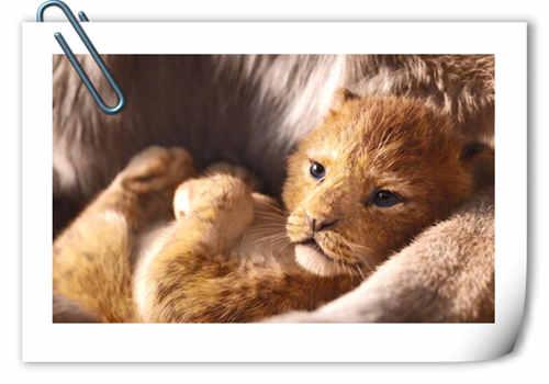 """迪士尼""""真人版""""《狮子王》 发布首张海报 辛巴萌萌出镜?"""