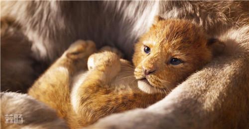 《狮子王》真人版发布新预告 超还原的狮子和超还原的童年回忆? 动漫 第1张