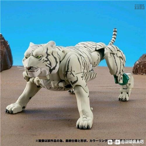 Takara Tomy变形金刚MP-50白虎勇士新产品图 野兽形态优秀 变形金刚 第6张